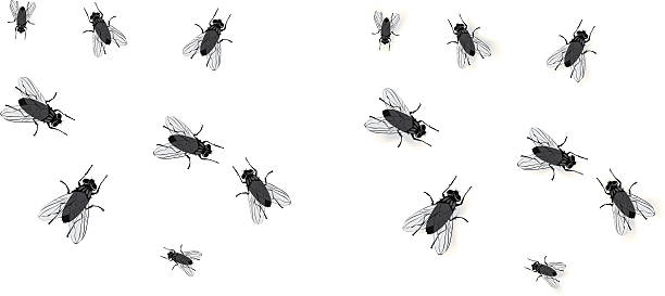 Best Fly Insect Illustrations, Royalty.