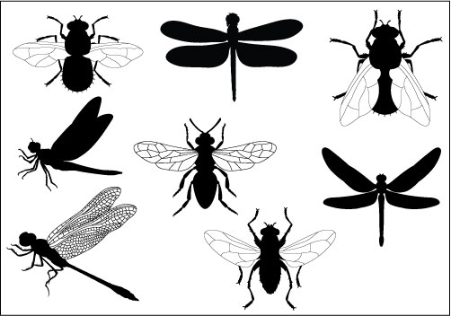 Flies Clipart.