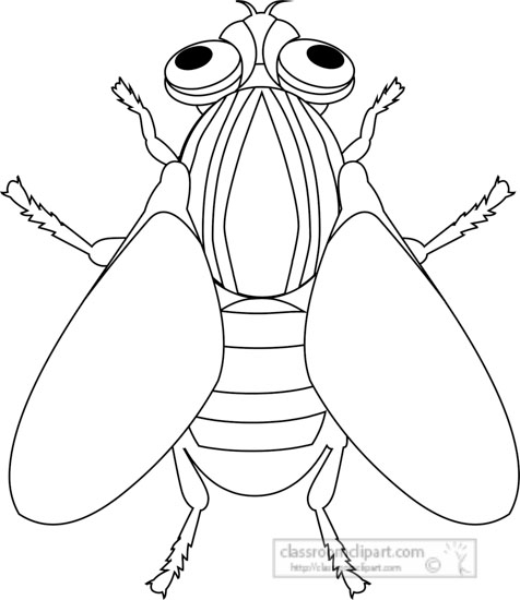 House fly insect black white outline clipart » Clipart Station.