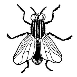 Black and White House Fly Clipart Image.