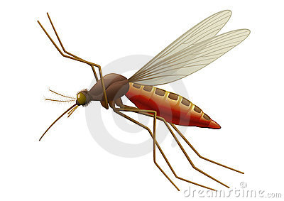 Flying Mosquito Stock Images.