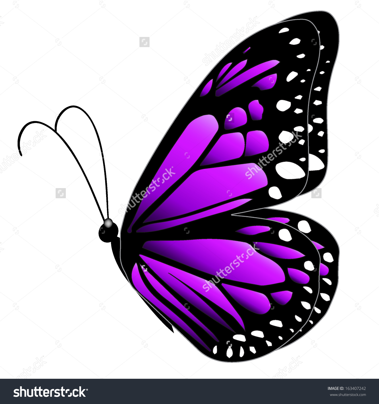 Illustration Purple Butterfly Flying On White Stock Vector.
