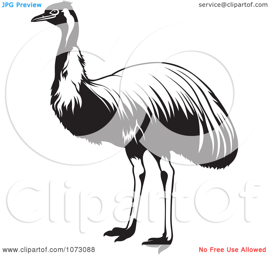 Clipart Black And White Ostrich Bird.