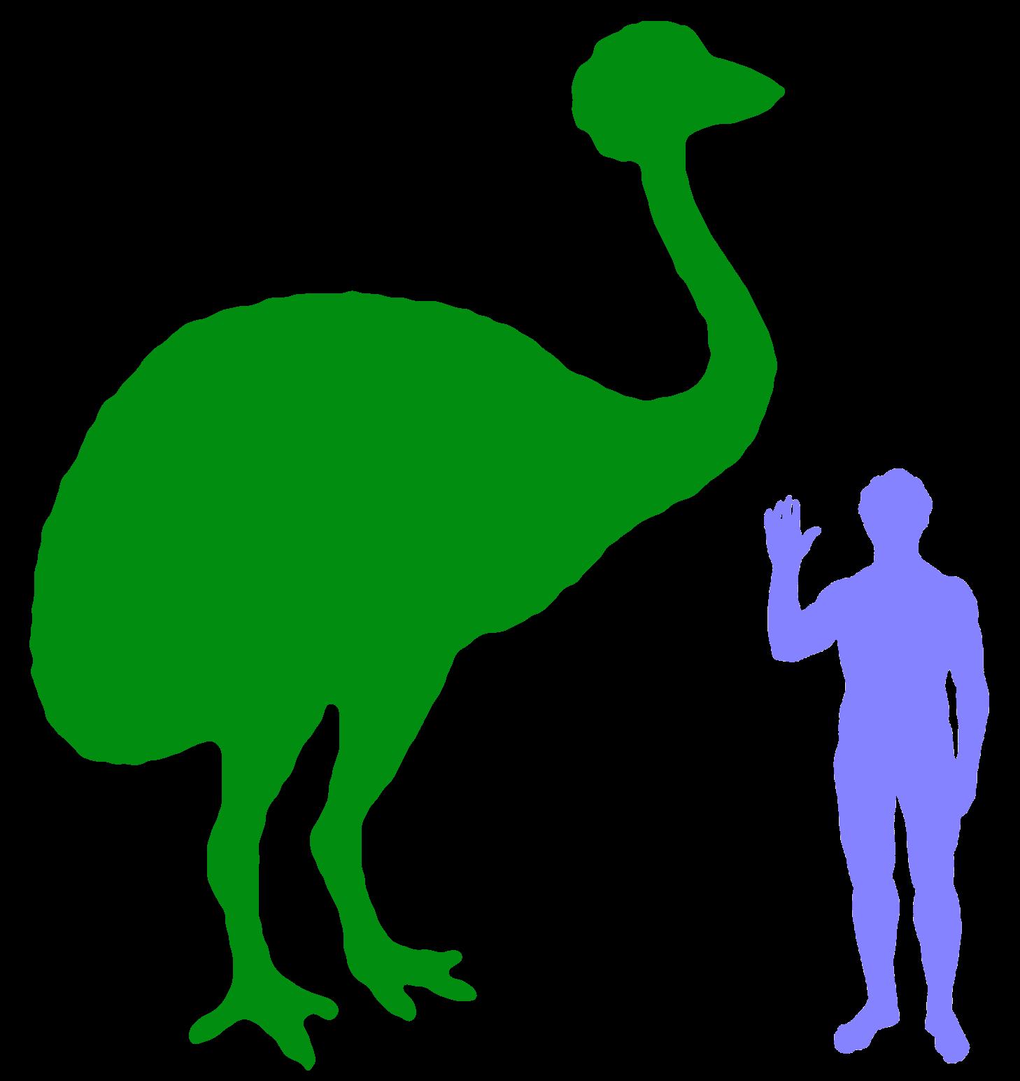 Elephant Bird « Big Animals.