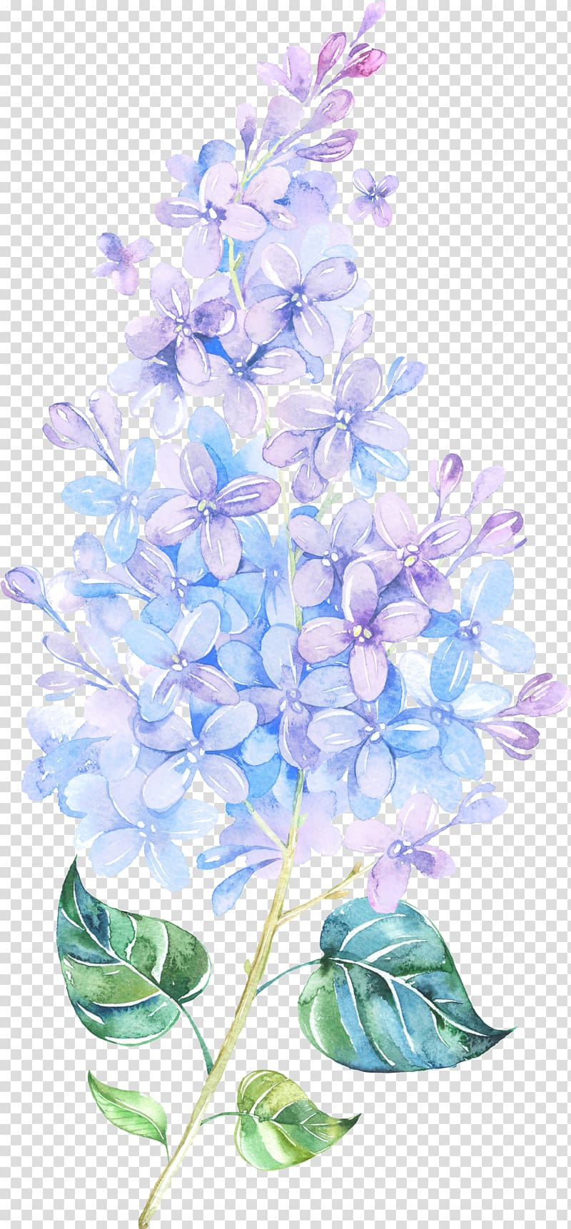 Flower Lilac Watercolor painting Purple , Floating Flower.