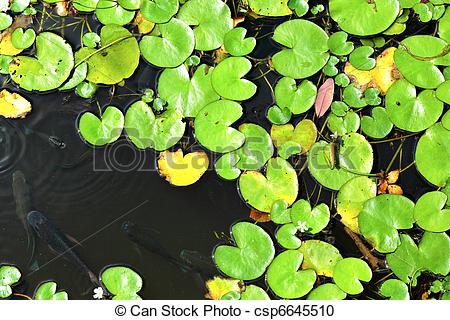 Stock Photography of floating plants in pool csp6645510.