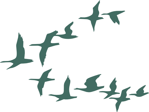 Teal Flock Of Geese Clip Art at Clker.com.