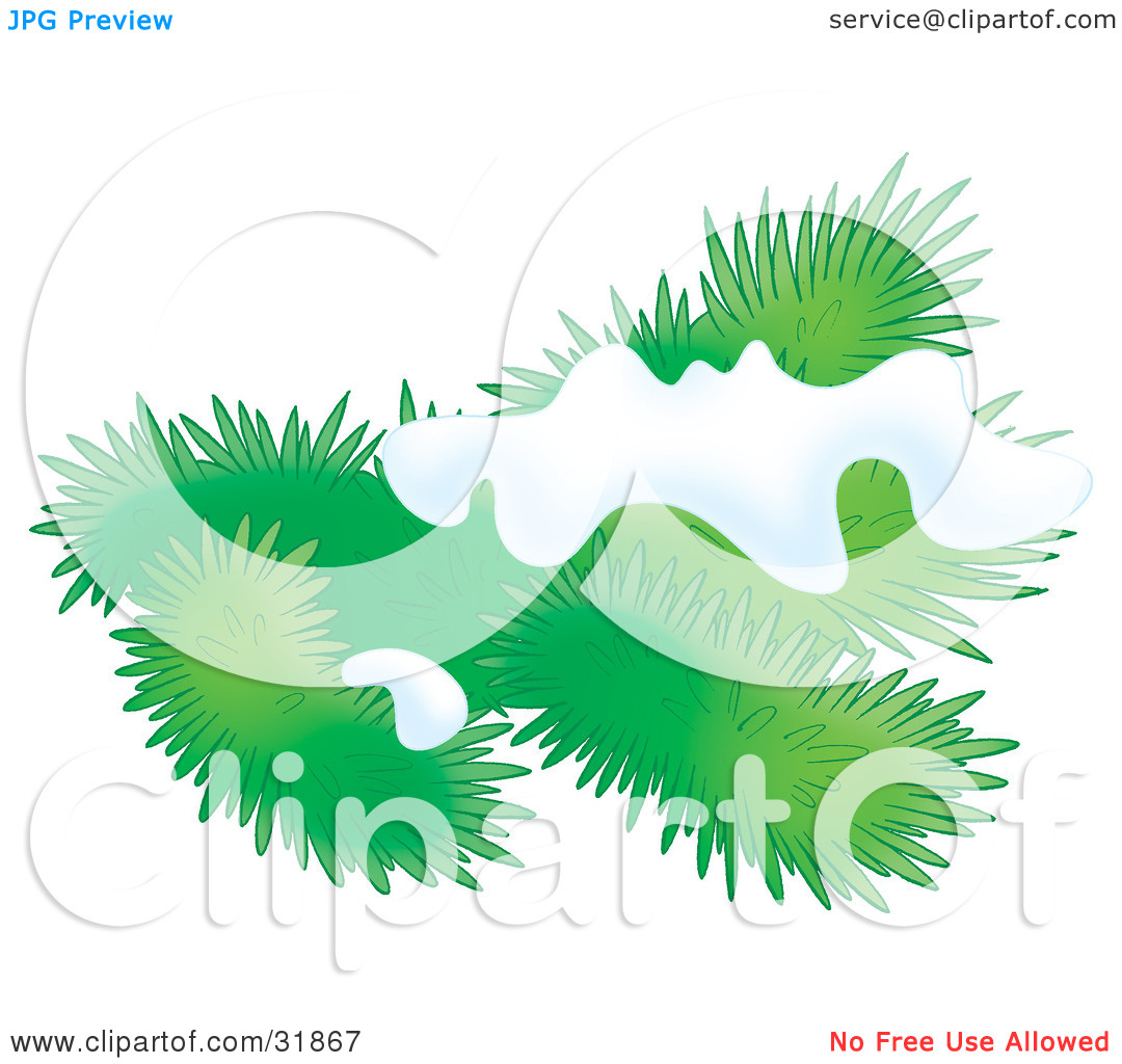 Clipart Illustration of an Evergreen Tree Branch Flocked In Snow.