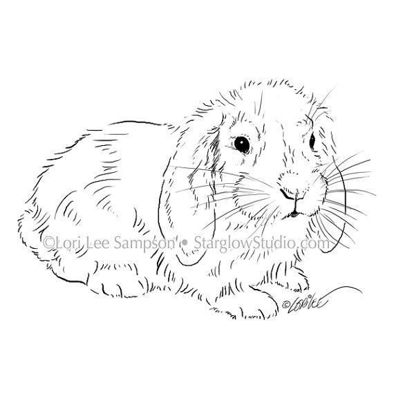 Floppy ear bunny drawing.
