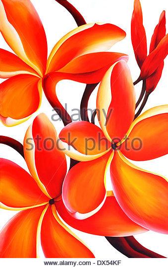 Flor De Cebo Stock Photos & Flor De Cebo Stock Images.