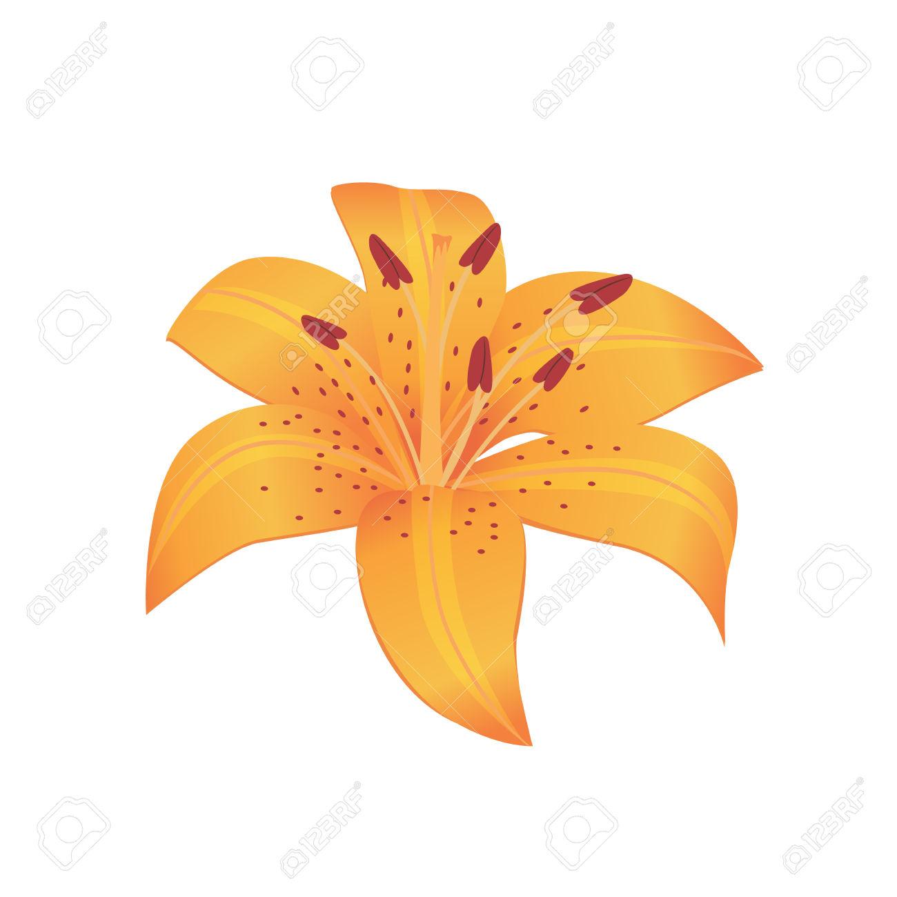 Beauty Flower Design Flat Style Isolated. Blooming Orange Flower.