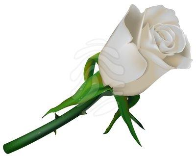 White Rose Clip Art.