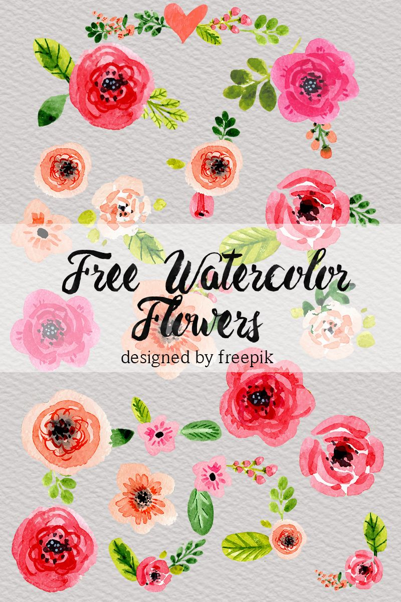 DLOLLEYS HELP: Free Watercolor Flowers.