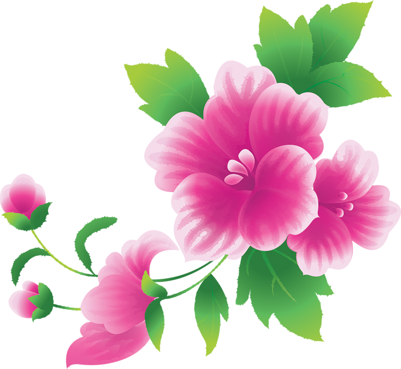 Flower Clipart Hd Png.