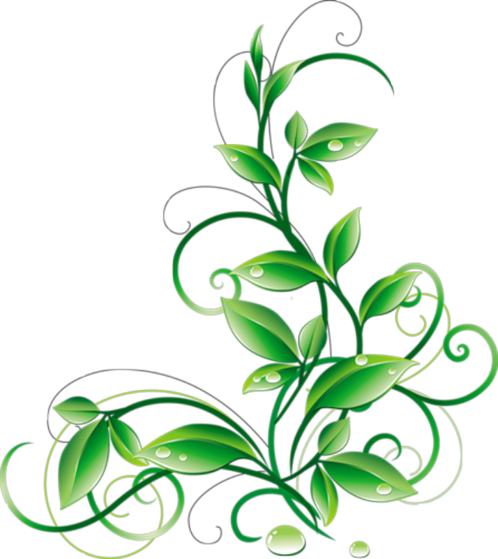Floral Green Leaves And Water Droplets Png Clipart.