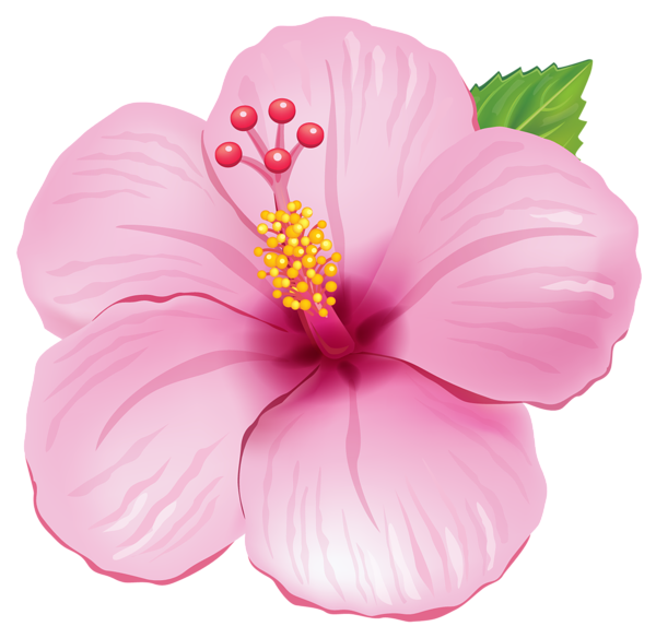 Yellow Exotic Flower PNG Clipart Picture.