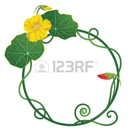 199 Nasturtium Stock Vector Illustration And Royalty Free.