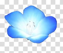 Flores azules transparent background PNG clipart.