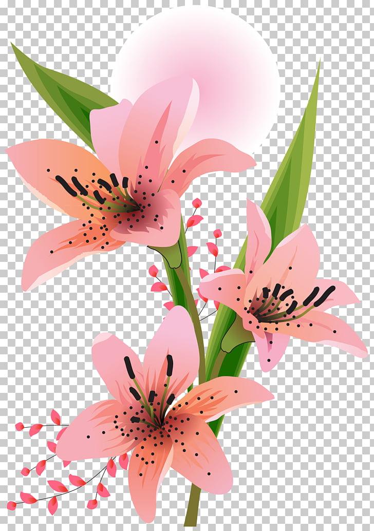 Lilium , flores blancas PNG clipart.