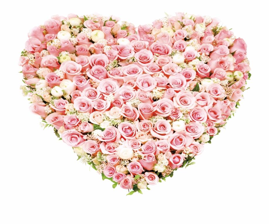 Garden Roses Beach Rose Flowers Heartshaped.