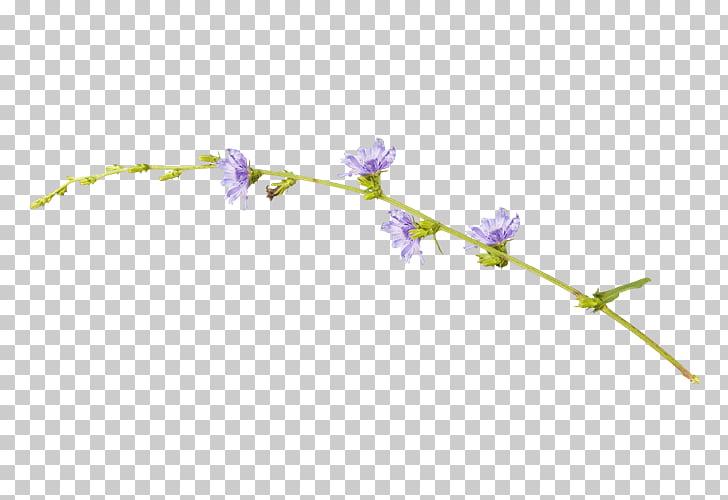 Violeta, flores lilas PNG Clipart.