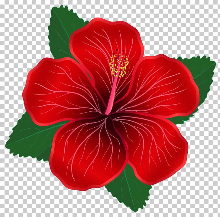 Flor roja, flores rojas s PNG Clipart.