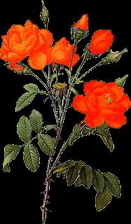 ZOOM DISEÑO Y FOTOGRAFIA: 30 flores vintage,png transparente,scrap.