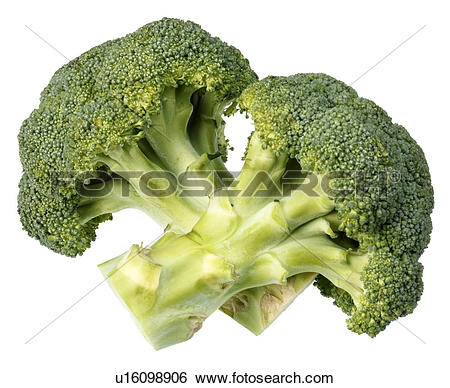 Stock Images of Broccoli Florets Cut Out u16098906.