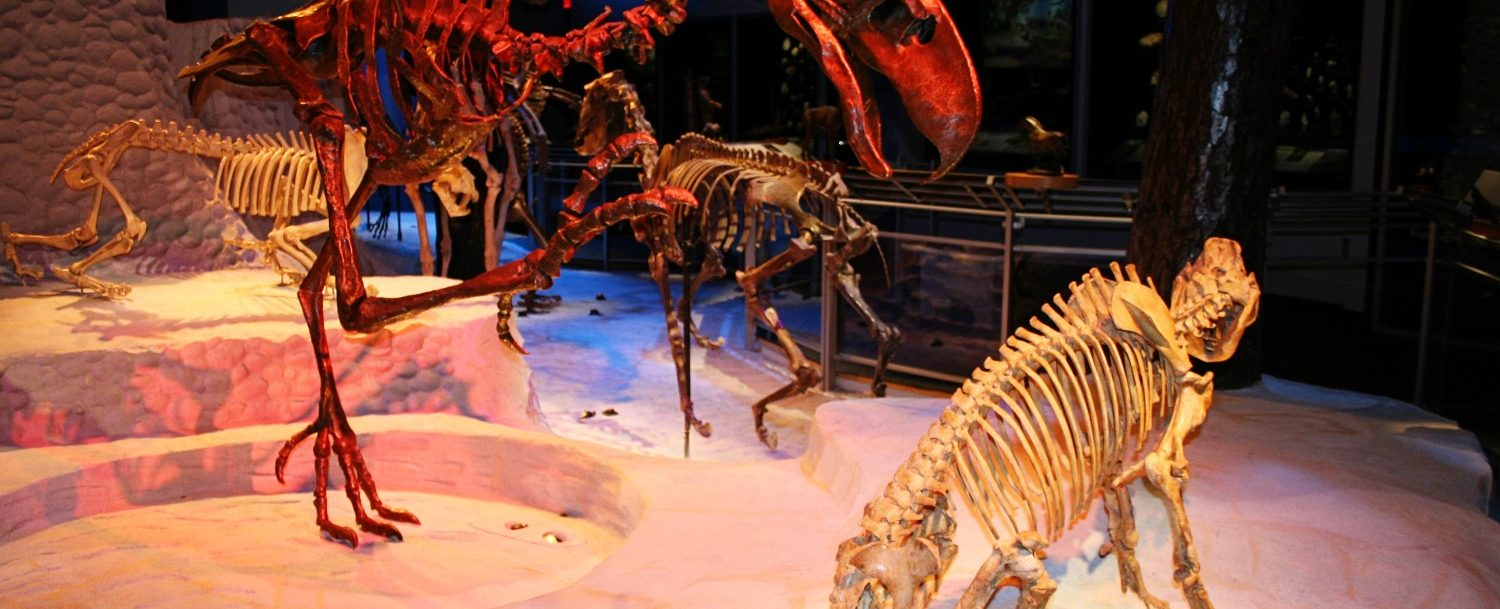 Why You Need to Visit the Florida Museum of Natural History.