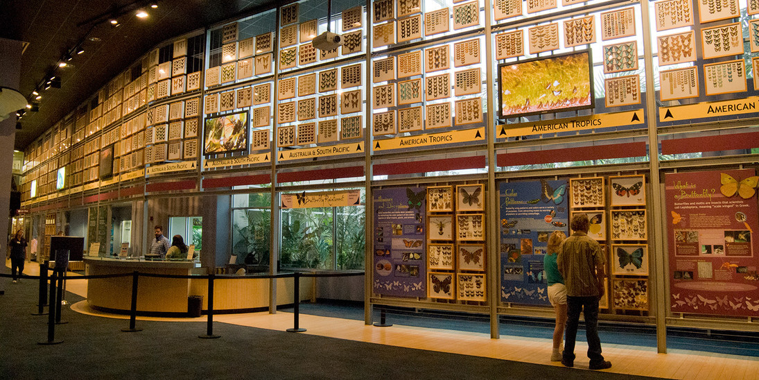 Indoor Butterfly Exhibits. Courtesy of Florida Museum of.