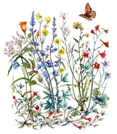 wild flower drawing.