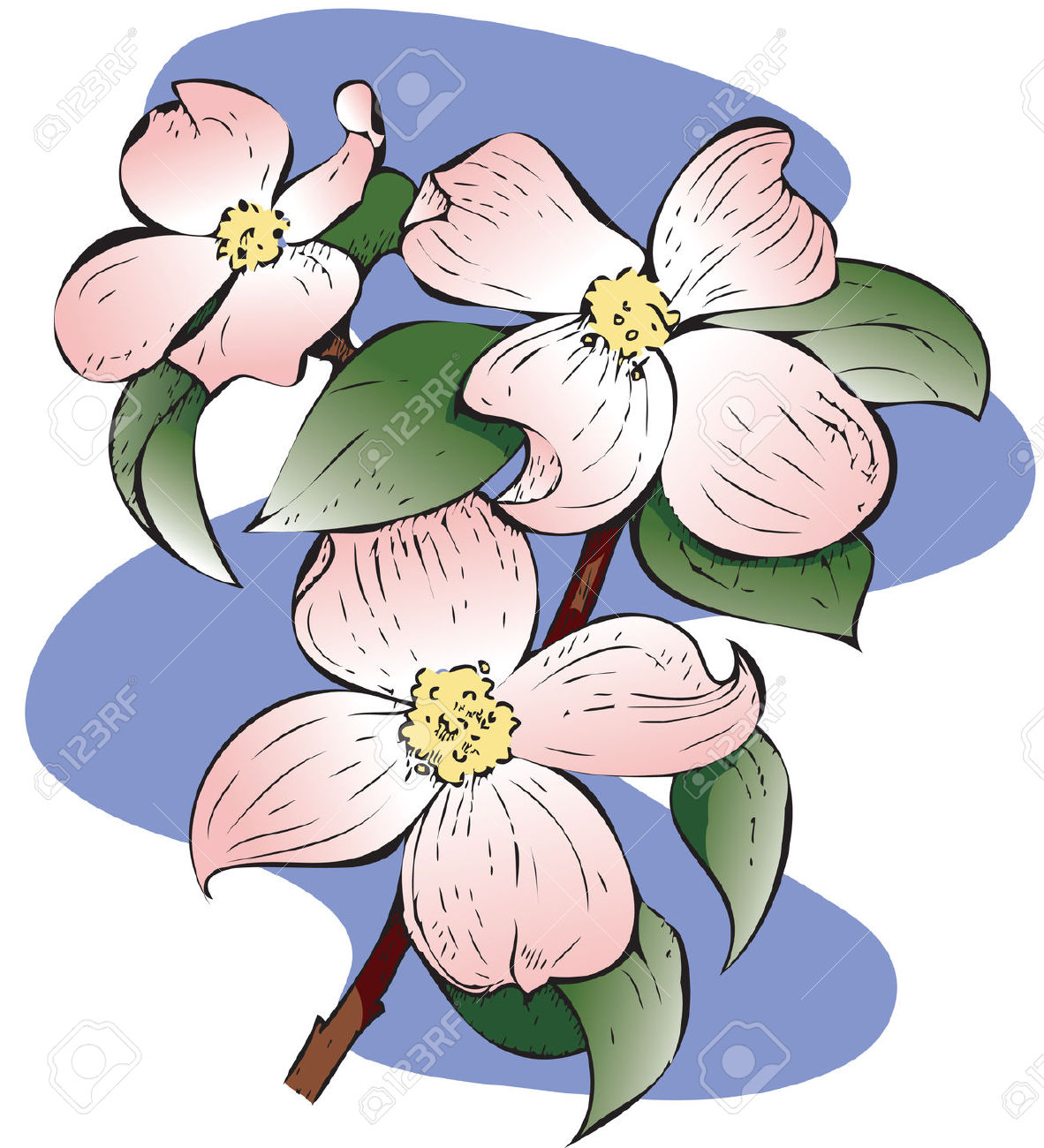 Detailed Illustration Of A Red Flowering Dogwood.. Hand.