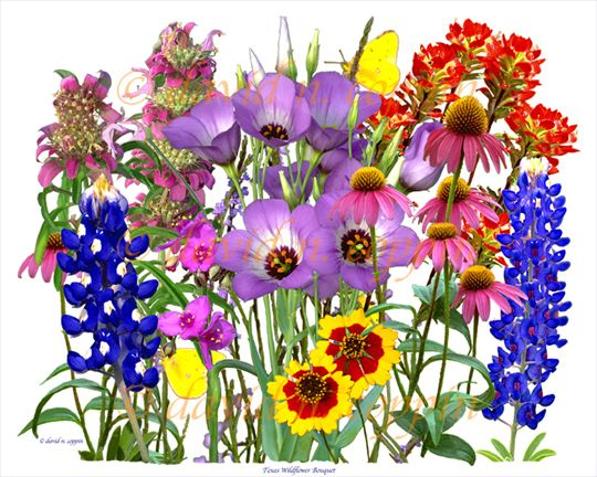 Texas Wildflowers Embroidery Designs