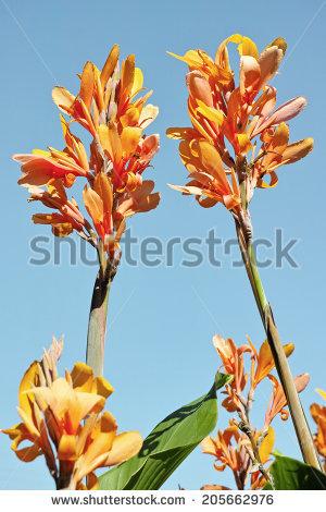 Floriferous Stock Photos, Royalty.