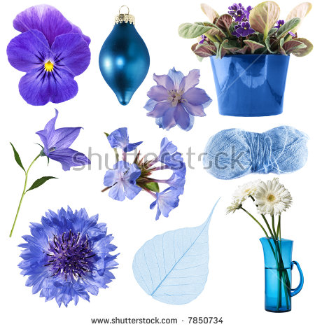 African Violet Stock Images, Royalty.