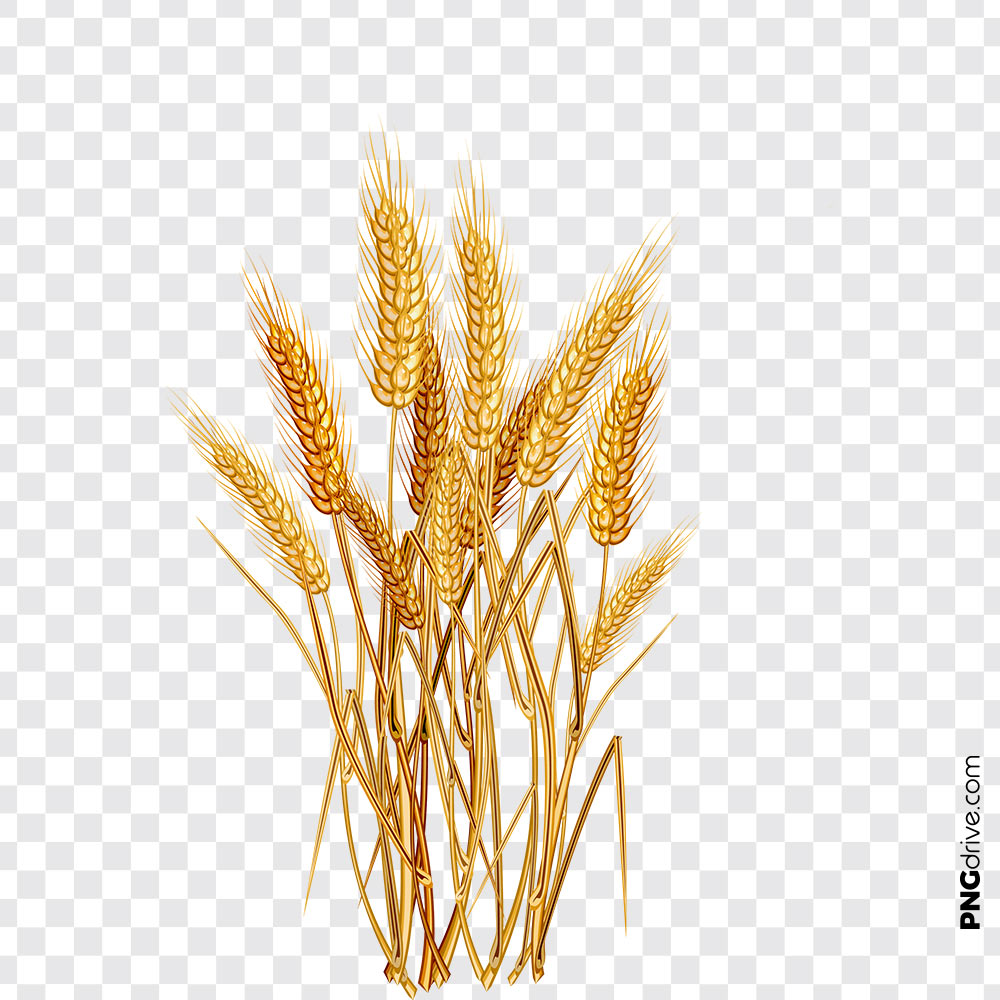 Wheat Flour Vector PNG Clipart PNG Image.