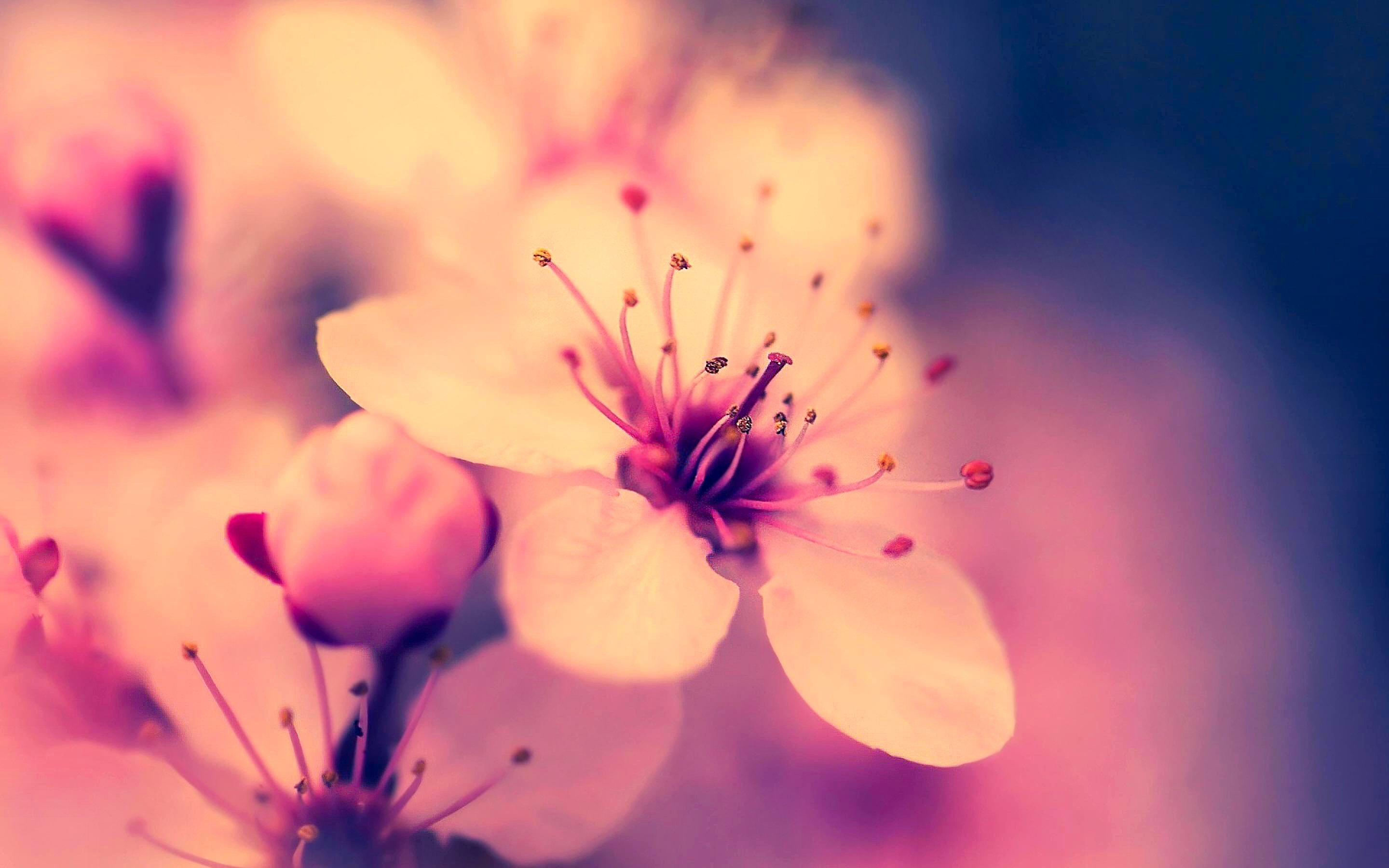 4446 Flower HD Wallpapers.