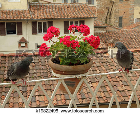 Stock Image of beautiful tuscan balcony with flowers and pigeons.