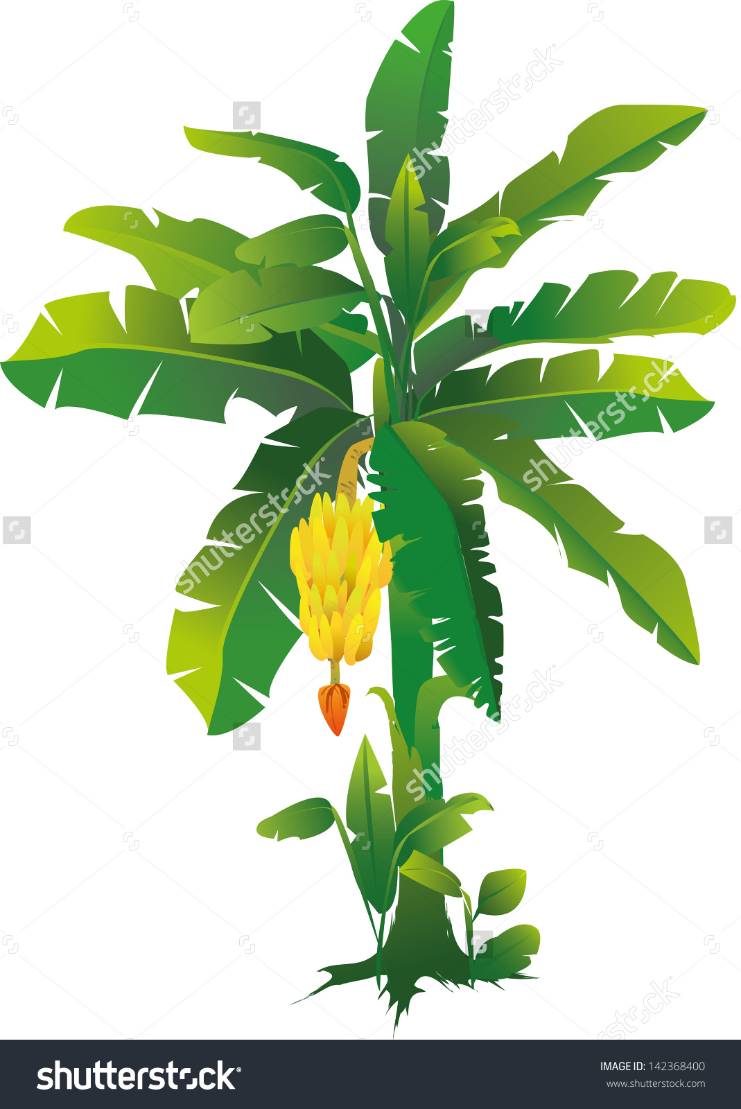 flower banana clipart 20 free cliparts  download images