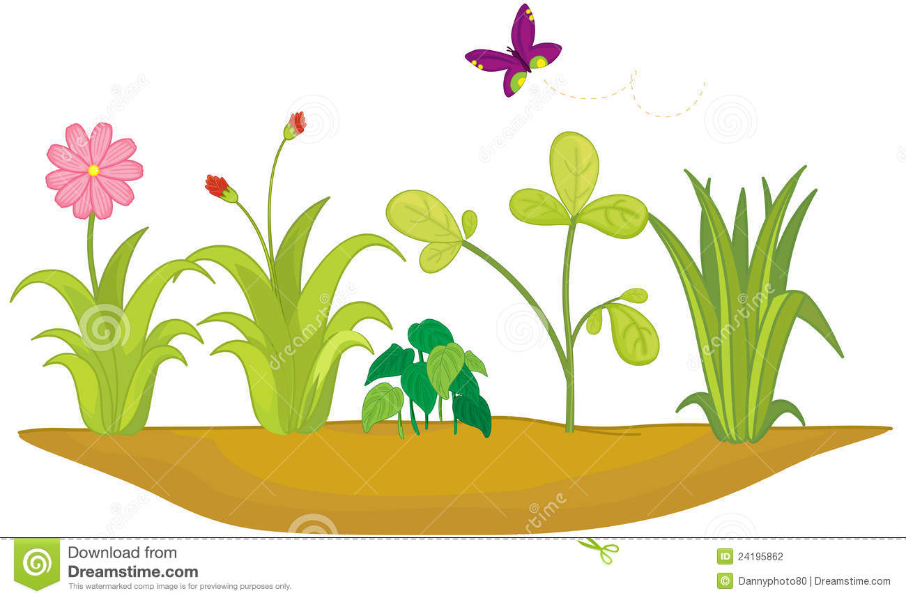Flower Bed Stock Photography.