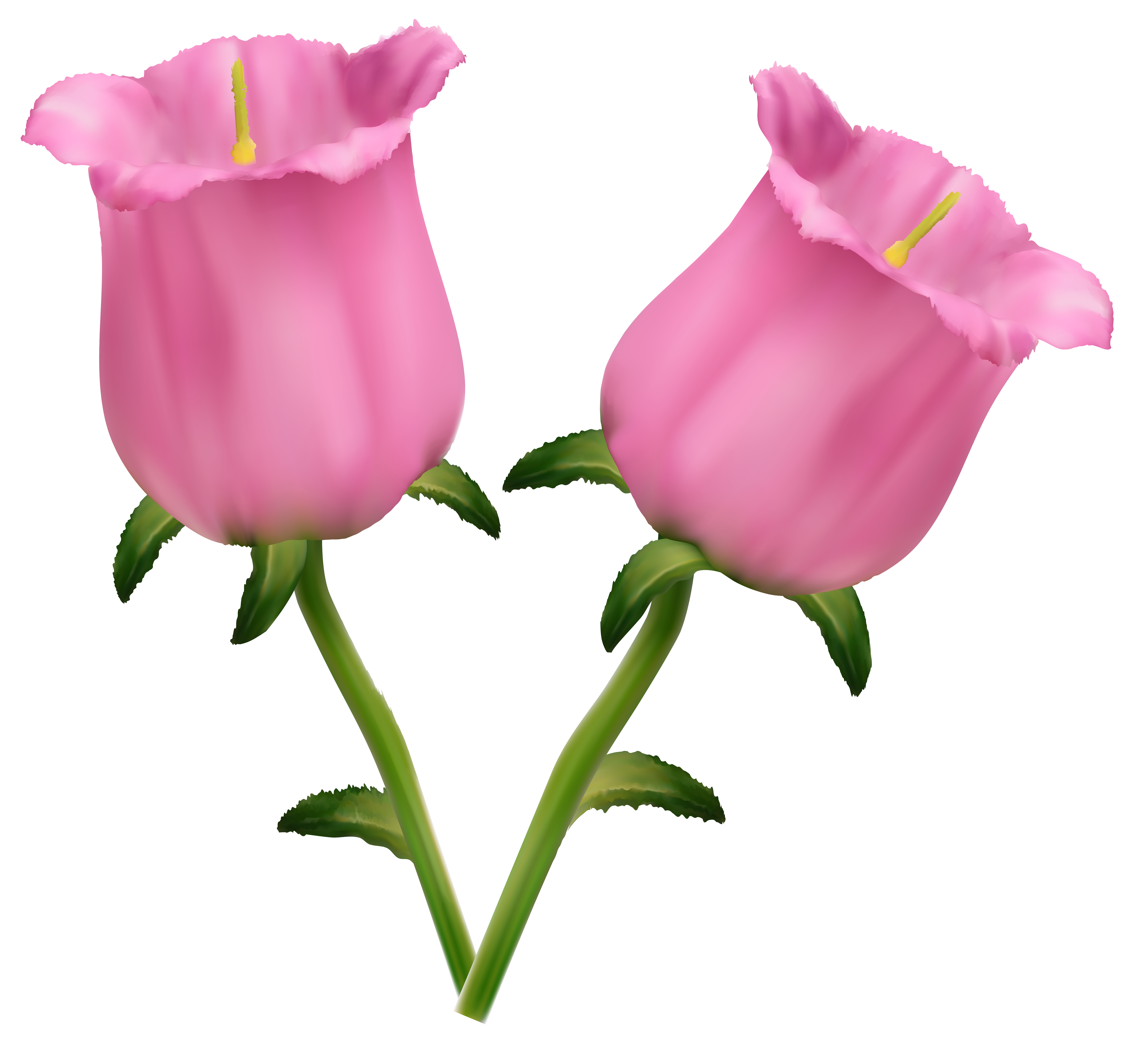 Pink Flowers Bells PNG Clipart Image.