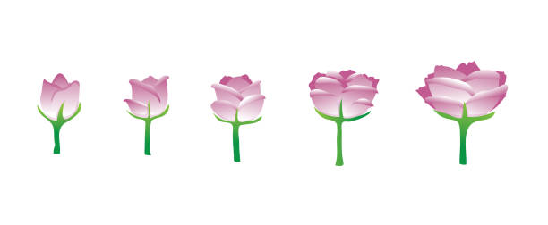 Best Flower Blooming Illustrations, Royalty.