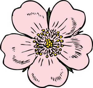 Wild Rose Bloom Clip Art.