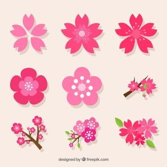 Cherry Blossom Vectors, Photos and PSD files.