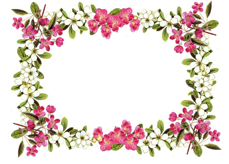 floral borders clipart #15