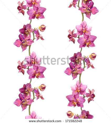 Repeated Floral Border Lines Orchid Flowers Stock Illustration.