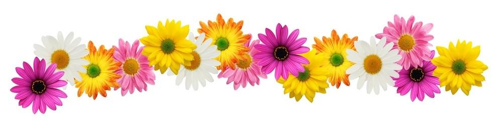 Spring Flower Border Clip Art Free.