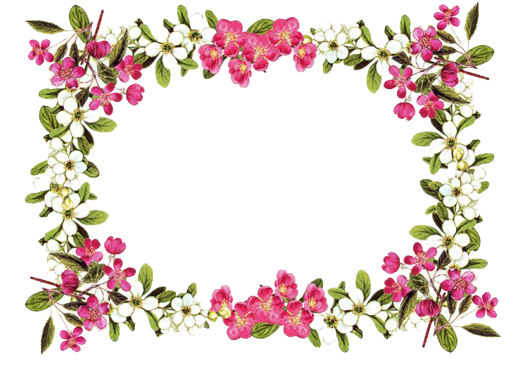 Flowers Borders PNG Transparent Images.