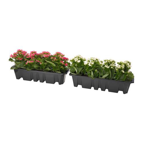 SOCKER Flower box with holder In/outdoor/orange 51x19 cm.