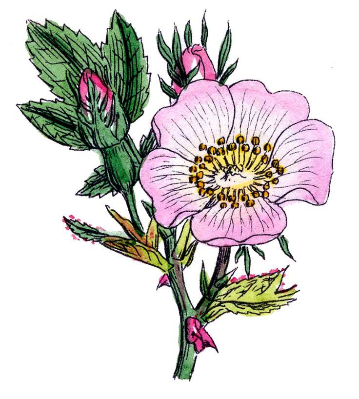 1000+ images about Botanicals on Pinterest.